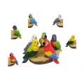 Budgie/Parrot/Lorikeet on Log Display Pack