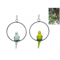 Budgie in Hanging Metal Ring