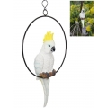 Cockatoo in Hanging Metal Ring
