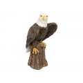 Eagle Clawing Tree Stump