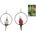 Galah/Cockatoo in Hanging Metal Ring