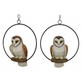 Australian Barn Owl in Hanging Metal Ring