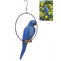 Blue Parrot in Hanging Metal Ring