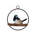 Blue Fairy Wren in Hanging Metal Ring