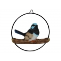 Blue Fairy Wren in Hanging Metal Ring (Small)