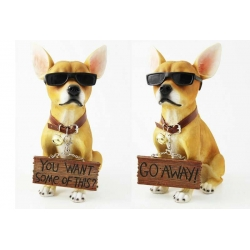 Chihuahua in Sunnies with Attitude & Sign