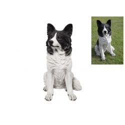 Border Collie Dog Sitting (Large)