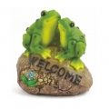 "Frogs on ""Welcome"" Rock"