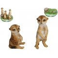 Cute Meerkats on Garden Display Pack