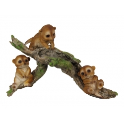 Meerkat Babies on Tree/Log