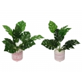 Cement Red Moroccan Design Pot with Fern