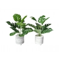 Cement Moroccan Design Pot with Fern